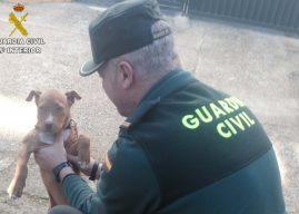 Detenido por robar un cachorro de perro en un huerto de Riotinto