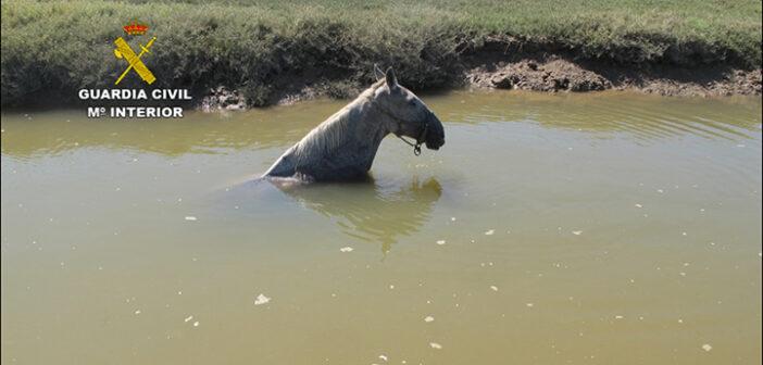 Rescatan un caballo que se había caído en un caño de las marismas del río Piedras